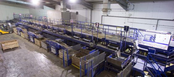 Potato Grading & Handling Line from Tong – Produce World UK