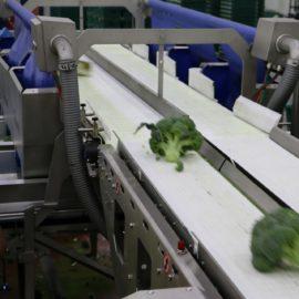 Broccoli Trimmer