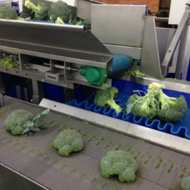 4 reasons why Automated Broccoli Trimming is the future!