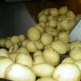Martin Maq Vegetable Polisher