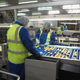 The top 3 benefits of Automated Vegetable Handling | Making labour less laborious