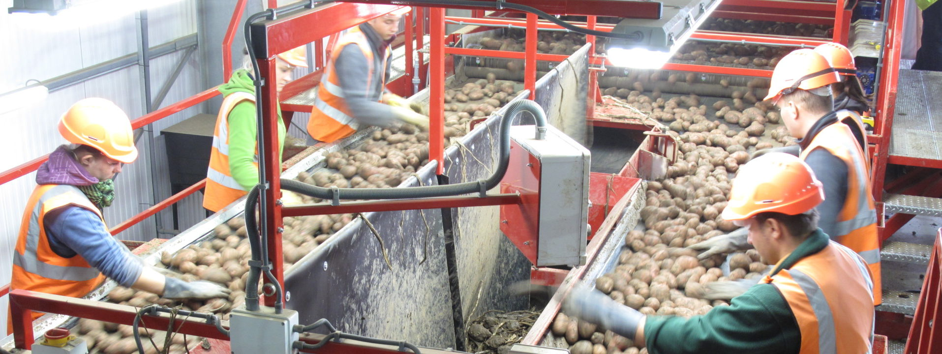 tong-potato-vegetable-inspection-roller-tables-3