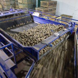 Potato Grading and Potato Handling