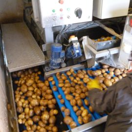 Mobile Vegetable Washer