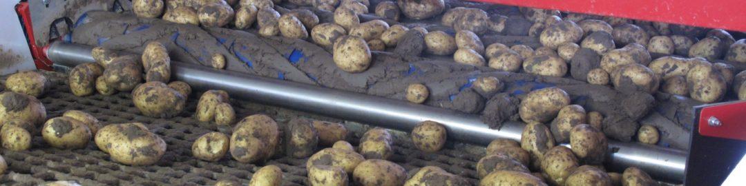 Potato Cleaning