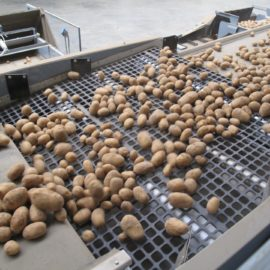 Potato Grading | 8 Ways to Reduce Damage & Maximise Value