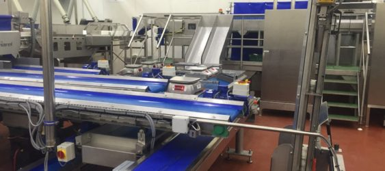 Vegetable Conveyors