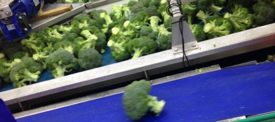 Broccoli Handling