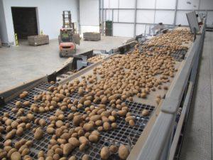 Potato Grading & Potato Processing Machine   Tong Engineering UK