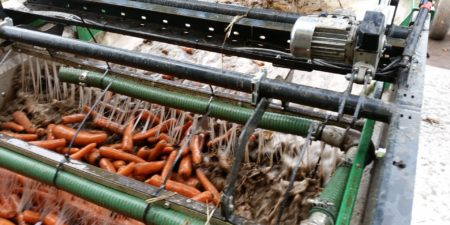 Carrot Washing & Grading Line from Tong