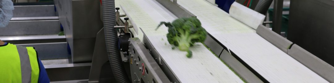 BROCCOLI CONVEYORS