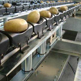 MAF Roda Vegetable Grading