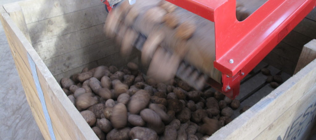 Potato Grading Box Filling Caretaker Grader from Tong (7)