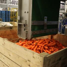 Carrot Grading, Handling & Processing