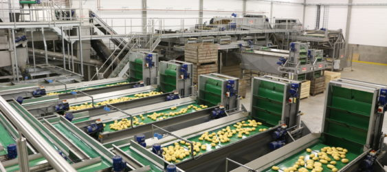 Potato Grading & Washing Line from Tong Engineering