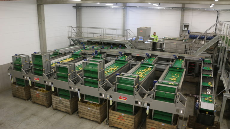 Potato Box Filling with Single Vertical Box Fillers