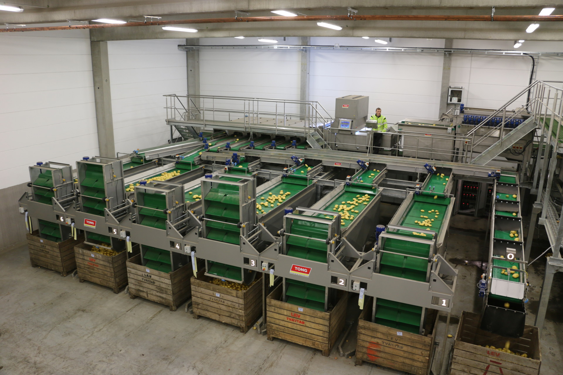 Potato Box Filler Potato Handling Line Tong Engineering Uk