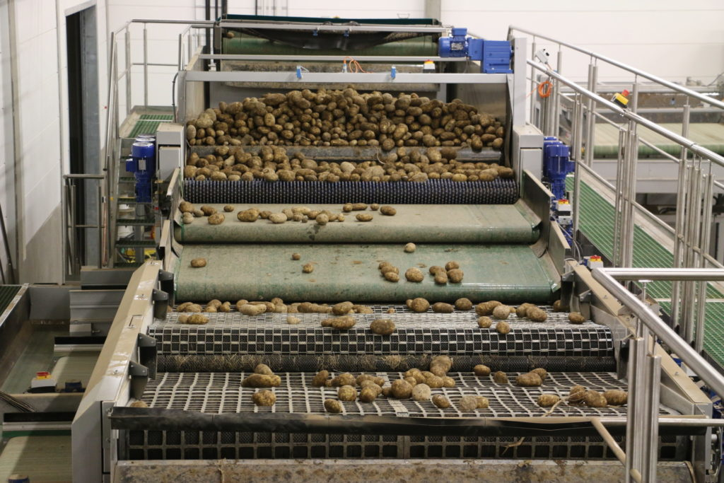 Potato Grading Amp Potato Processing Equipment Tong