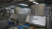 Carrot Optical Sorting Line at Poskitts Carrots