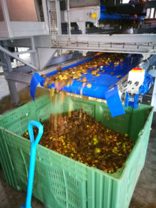 Cider-Apple-Handling-euqipment-apple-cleaning-loading-destoning-machines-Tong-Engineering