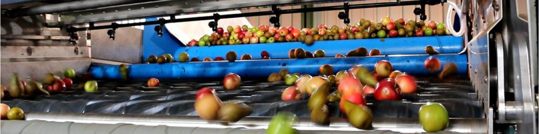Cider Apple Cleaning