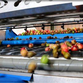 Apple Cleaning & Destoning