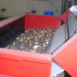 Bulb Grading Machine