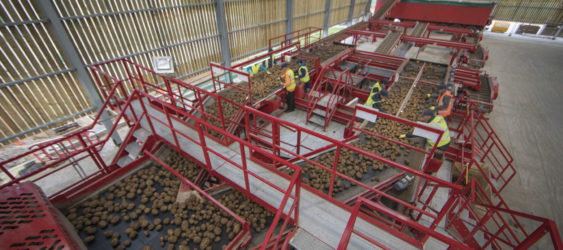 Potato Grading, Cleaning and Bulker loading line