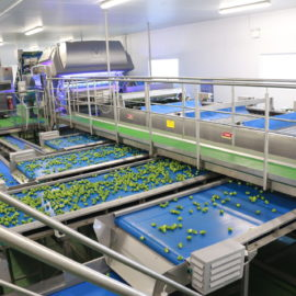 New line at TH Clements sprouts increased throughput