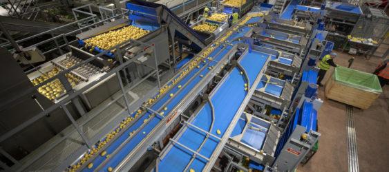 Potato Washing, Grading & Optical Sorting Line