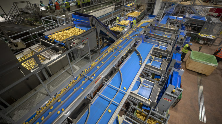 Potato Washing, Grading & Optical Sorting Line