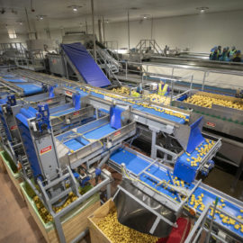Making the difference | The invaluable value of Advanced Vegetable Washing