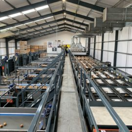 A new vision for high quality onion sorting