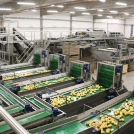 Newtec Potato Optical Sorting