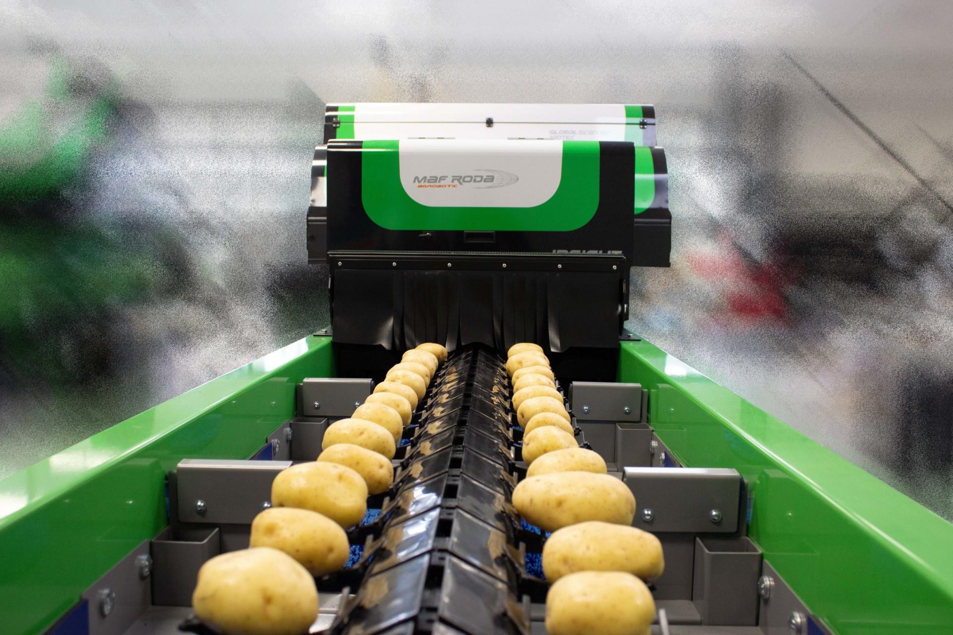 MAF Roda Internal External Potato Optical Sorting